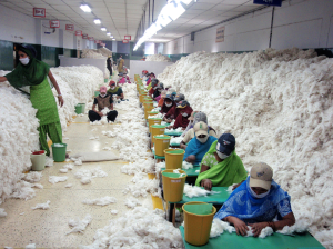 """Manually decontaminating cotton before processing at an Indian spinning mill (2010)"""